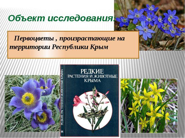 Объект исследования: Первоцветы , произрастающие на территории Республики Крым