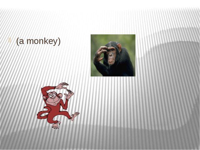 (a monkey)