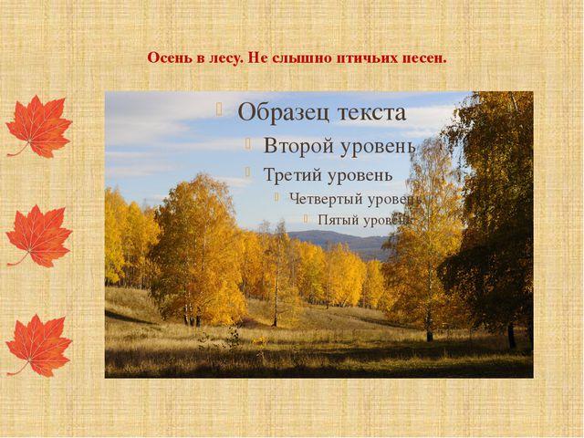 Осень в лесу. Не слышно птичьих песен.