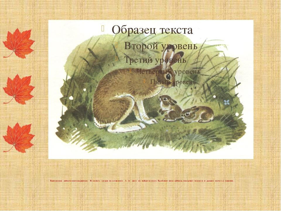 Притаились зайчата-листопаднички. Не скачут, следов не оставляют. А то лиса...