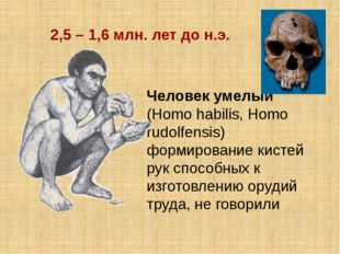 Человек умелый (Homo habilis, Homo rudolfensis) формирование кистей рук спосо