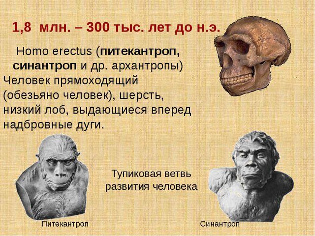 Homo erectus (питекантроп, синантроп и др. архантропы) Человек прямоходящий (...