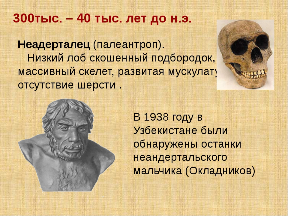 Неадерталец (палеантроп). Низкий лоб скошенный подбородок, массивный скелет,...