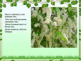 Цветет черемуха, как первый снег, Как светлый праздник середины мая, Весна бл