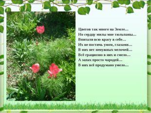 Цветов так много на Земле… Но сердцу милы мне тюльпаны… Впитали всю красу в с