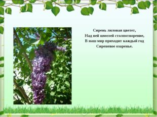 Сирень лиловая цветет, Над ней шмелей столпотворение, В наш мир приходит кажд