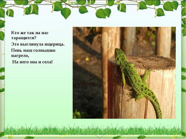Кто же так на нас таращится? Это выглянула ящерица. Пень наш солнышко нагрело...