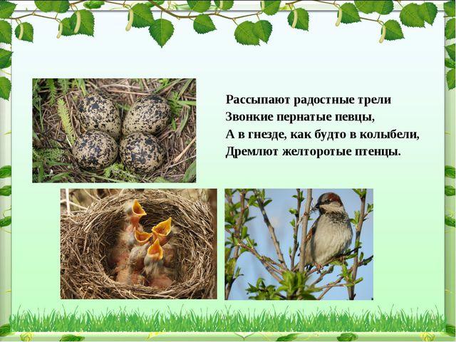 Рассыпают радостные трели Звонкие пернатые певцы, А в гнезде, как будто в кол...