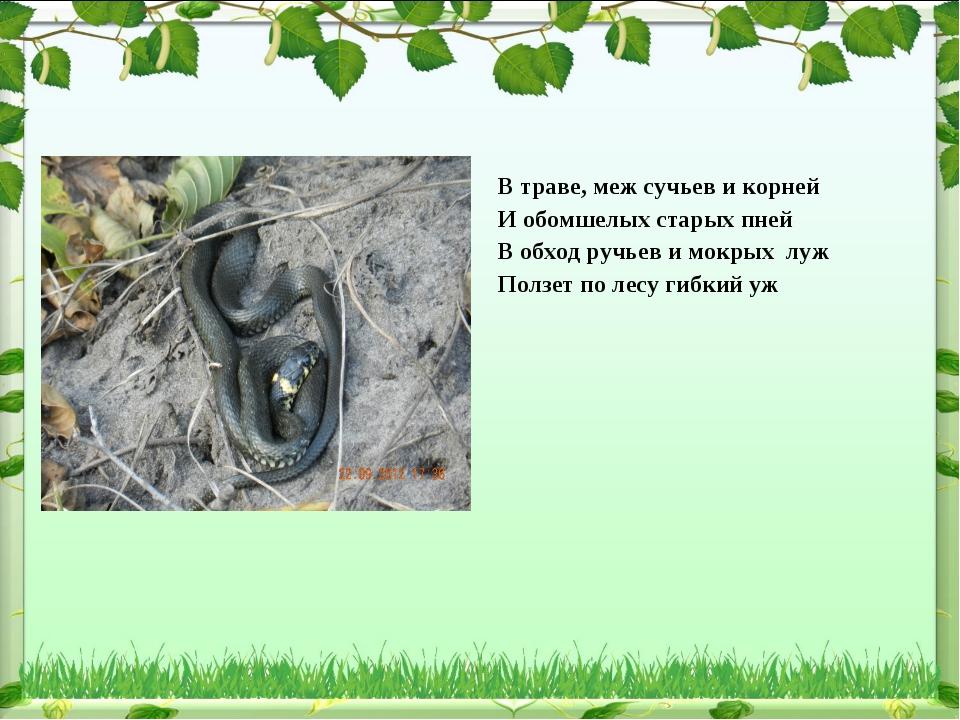 В траве, меж сучьев и корней И обомшелых старых пней В обход ручьев и мокрых...