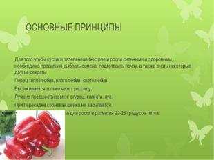 ОСНОВНЫЕ ПРИНЦИПЫ Для того чтобы кустики зазеленели быстрее и росли сильными
