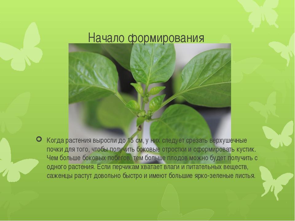 Начало формирования Когда растения выросли до 15 см, у них следует срезать ве...