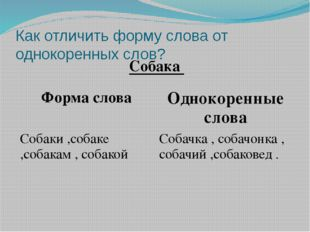 Как отличить форму слова от однокоренных слов? Собака Форма слова Однокоренны