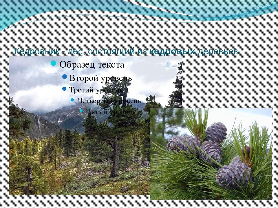 Кедровник - лес, состоящий изкедровыхдеревьев