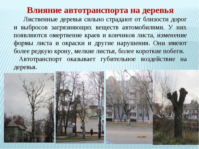 Влияние автотранспорта на деревья Лиственные деревья сильно страдают от близ...