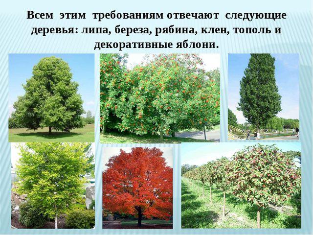 Всем этим требованиям отвечают следующие деревья: липа, береза, рябина, клен...