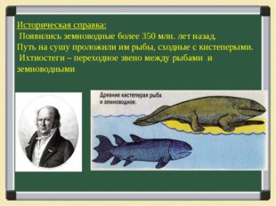 Историческая справка: Появились земноводные более 350 млн. лет назад. Путь н