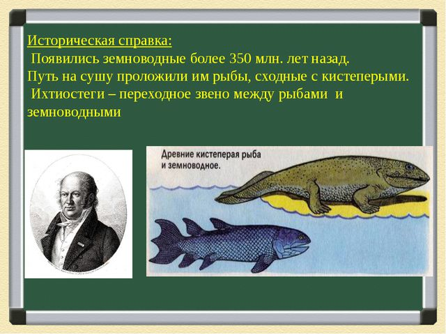 Историческая справка: Появились земноводные более 350 млн. лет назад. Путь н...