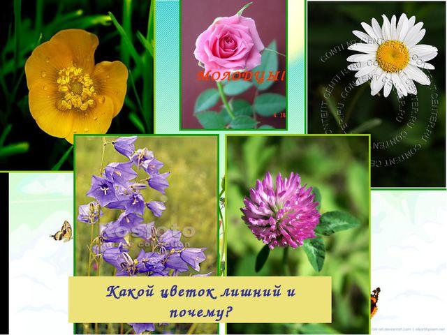 Какой цветок лишний и почему? МОЛОДЦЫ!