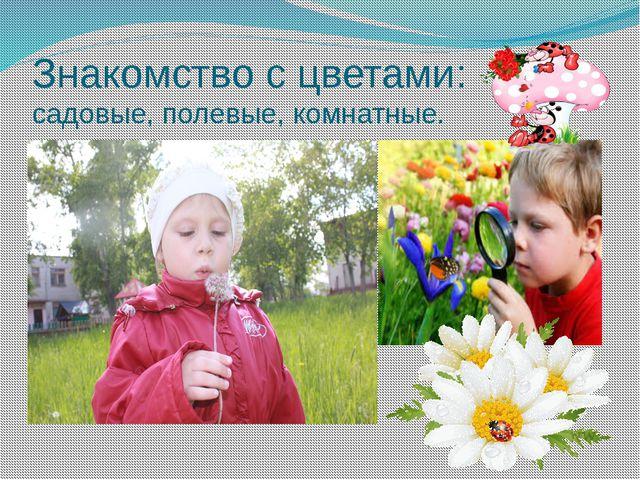 Знакомство с цветами: садовые, полевые, комнатные.