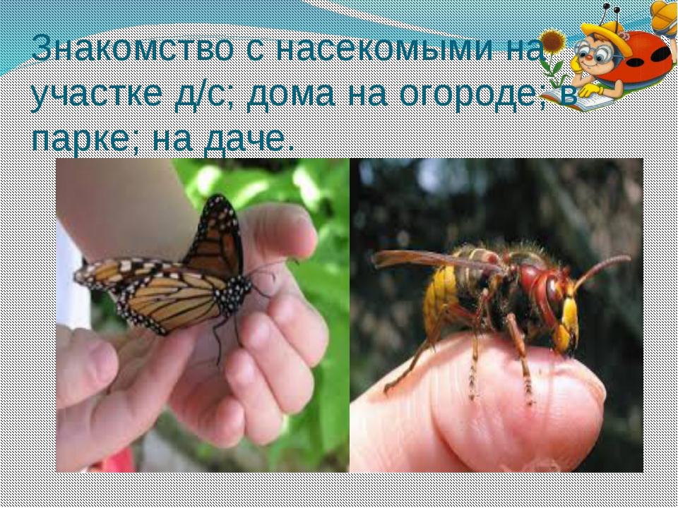 Знакомство с насекомыми на участке д/с; дома на огороде; в парке; на даче.