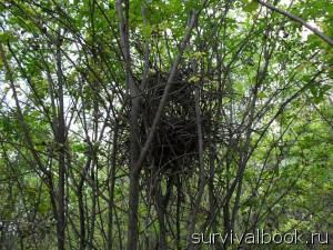 Птичье гнездо.