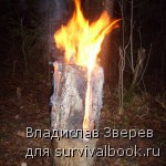 Фото 6 - Горящая Таежная свеча.