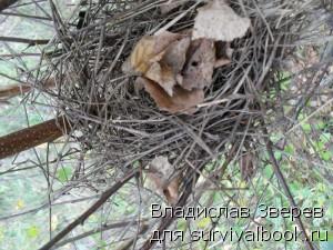 Птичье гнездо (вид сверху).