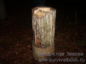 Фото 1 - Таежная свеча (крупный план)