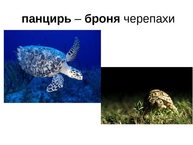 панцирь – броня черепахи