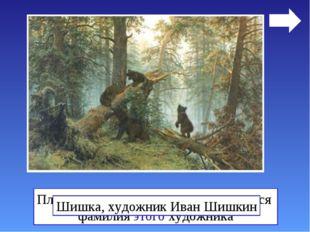 Плод дерева, с которым ассоциируется фамилия этого художника Шишка, художник