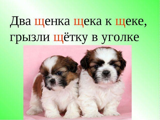 Два щенка щека к щеке, грызли щётку в уголке