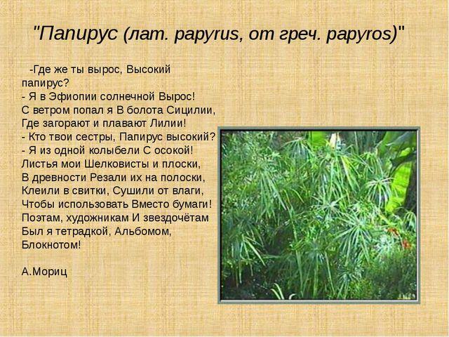 """""""Папирус (лат. papyrus, от греч. papyros)"""" -Где же ты вырос, Высокий папирус..."""