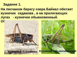 Задание 1. На песчаном берегу озера Байкал обитает кузнечик седакова , а на