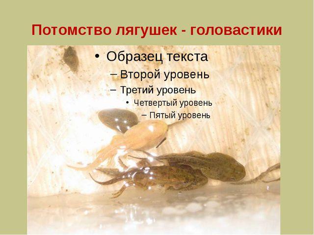 Потомство лягушек - головастики