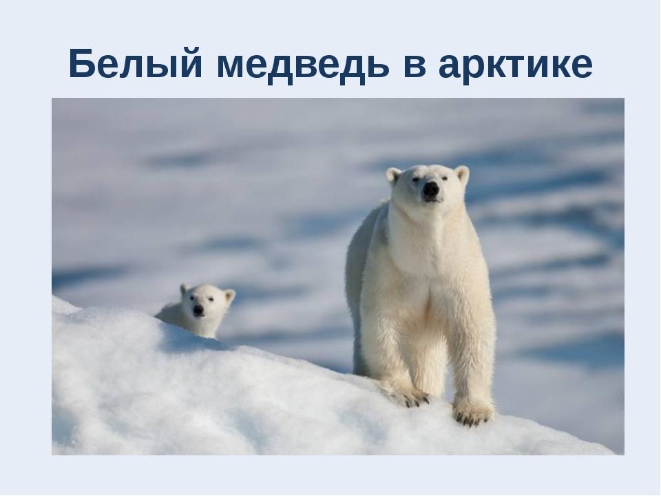 Белый медведь в арктике