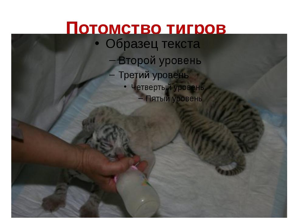 Потомство тигров