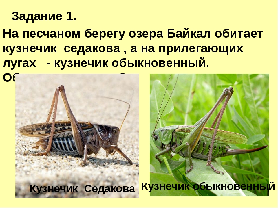 Задание 1. На песчаном берегу озера Байкал обитает кузнечик седакова , а на...