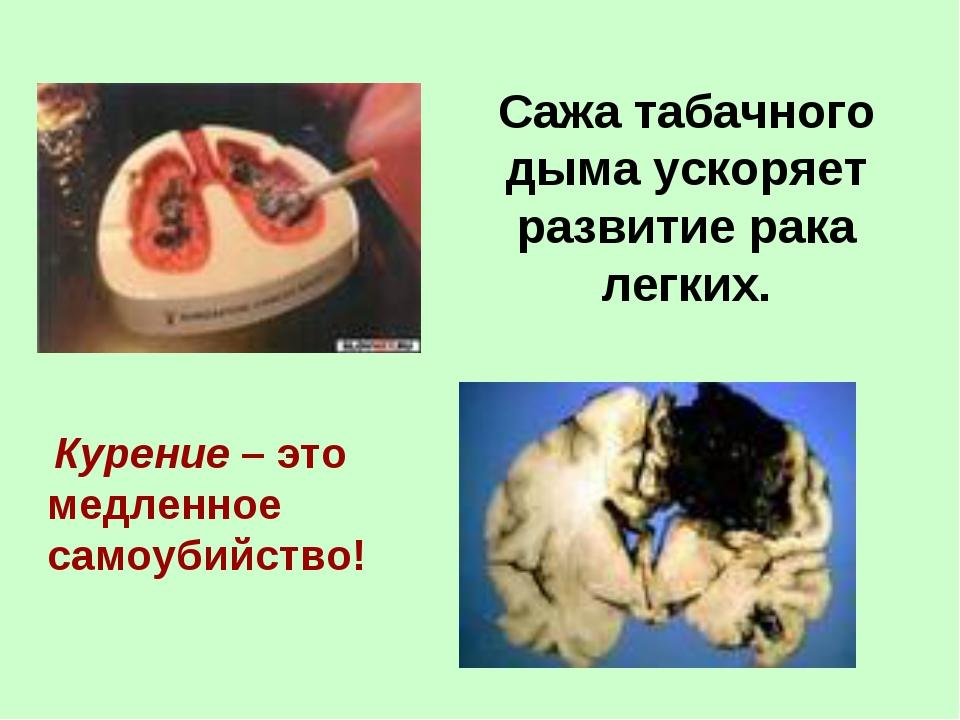 Сажа табачного дыма ускоряет развитие рака легких. Курение – это медленное с...