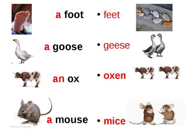 a foot a goose an ox feet geese oxen mice a mouse