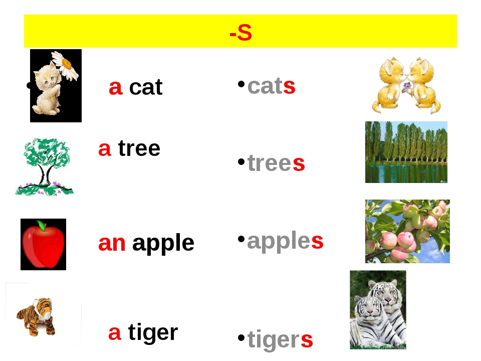 -S a cat a tree an apple a tiger cats trees apples tigers