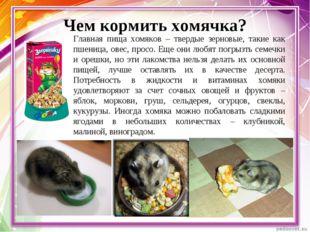 Чем кормить хомячка? Главная пища хомяков – твердые зерновые, такие как пшени