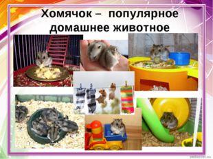 Хомячок – популярное домашнее животное