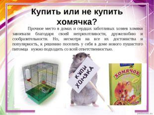 Купить или не купить хомячка? Прочное место в домах и сердцах заботливых хоз