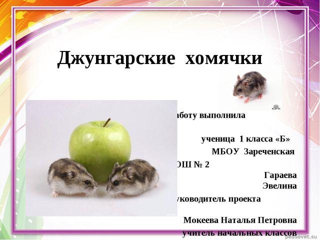 Джунгарские хомячки Работу выполнила ученица 1 класса «Б» МБОУ Зареченская СО...