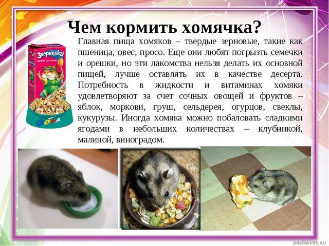 Чем кормить хомячка? Главная пища хомяков – твердые зерновые, такие как пшени...