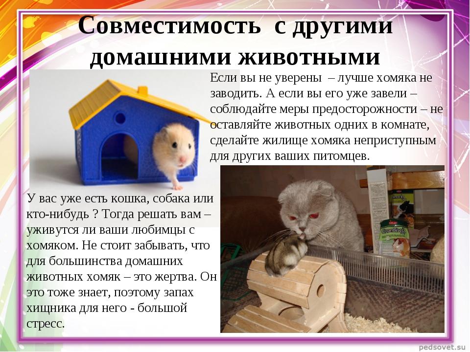Совместимость с другими домашними животными У вас уже есть кошка, собака или...