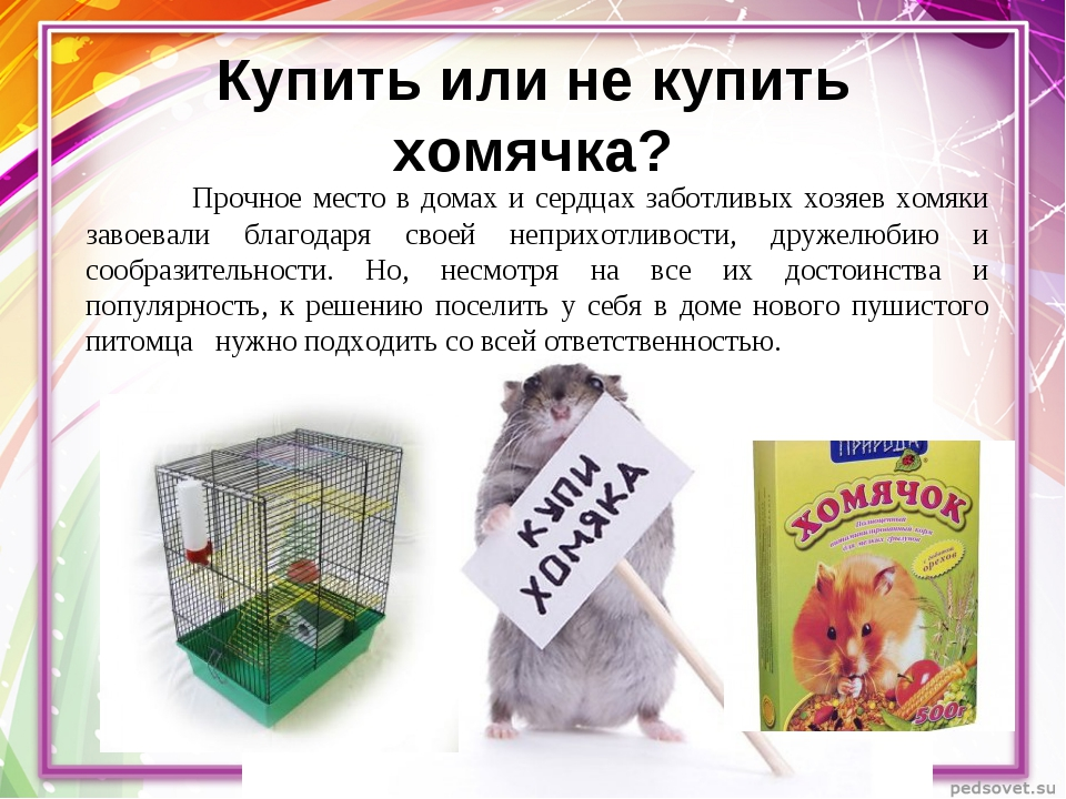 Купить или не купить хомячка? Прочное место в домах и сердцах заботливых хоз...