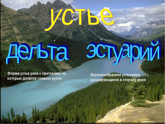 Форма устья реки с притоками, на которые делится главное русло Воронкообразно...