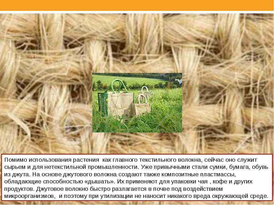 Помимо использования растения как главного текстильного волокна, сейчас оно с...