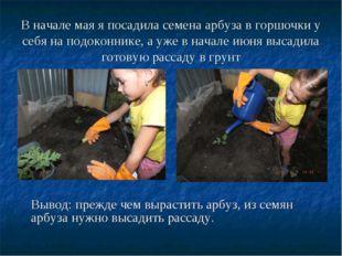 В начале мая я посадила семена арбуза в горшочки у себя на подоконнике, а уже
